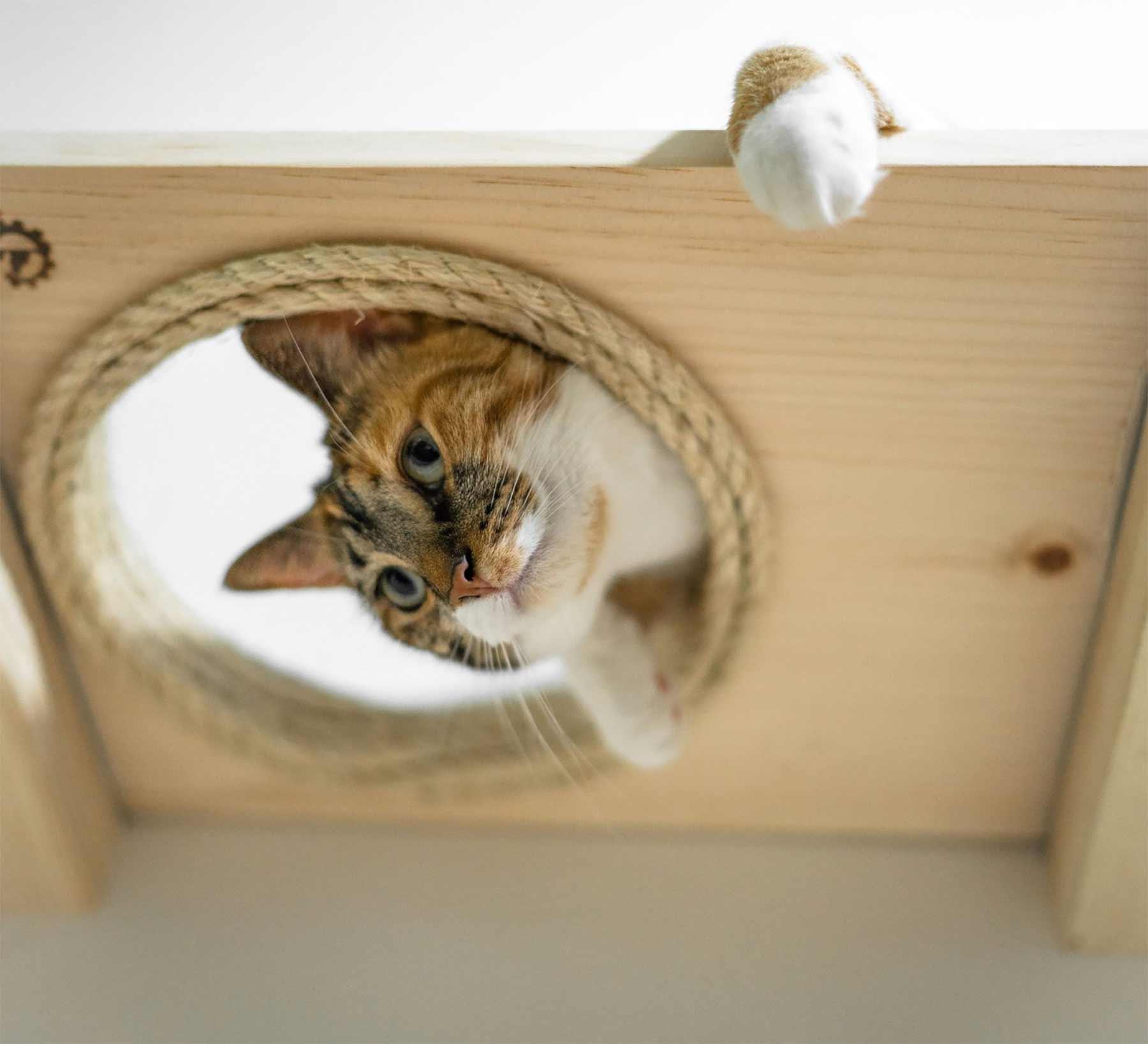 Modulares Katzenspielplatz-System für die Wand CatastrophiCreations-katzenspielplatz-wand-system_04