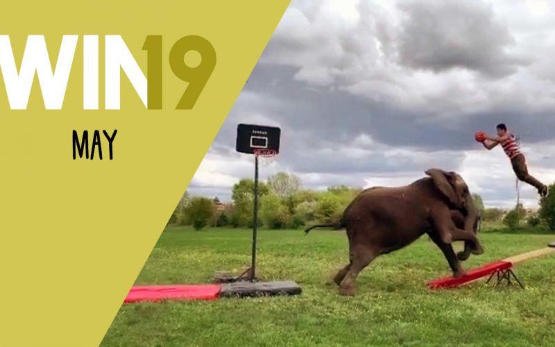 WIN Compilation Mai 2019