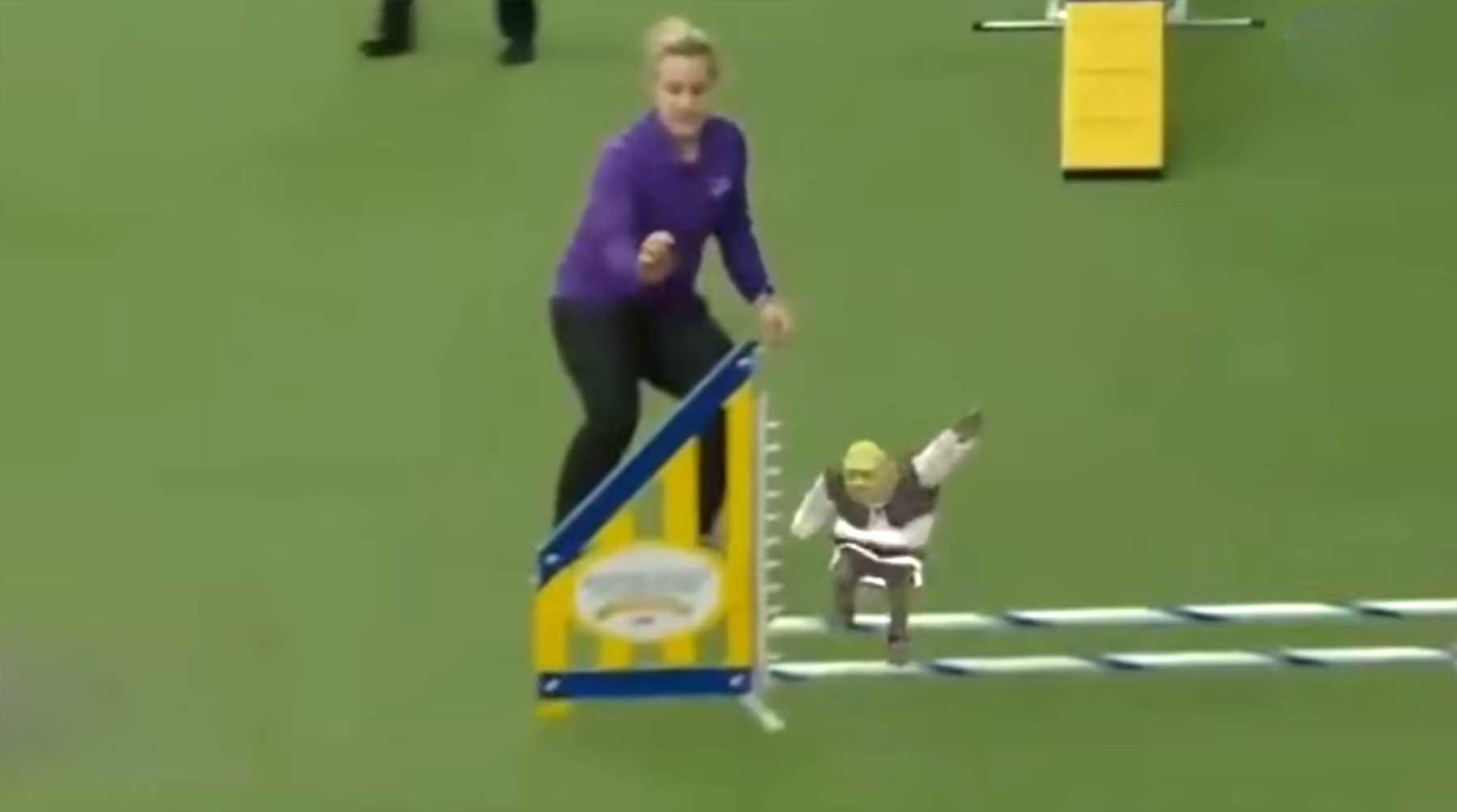 Mini-Shrek läuft einen Hunde-Parcours