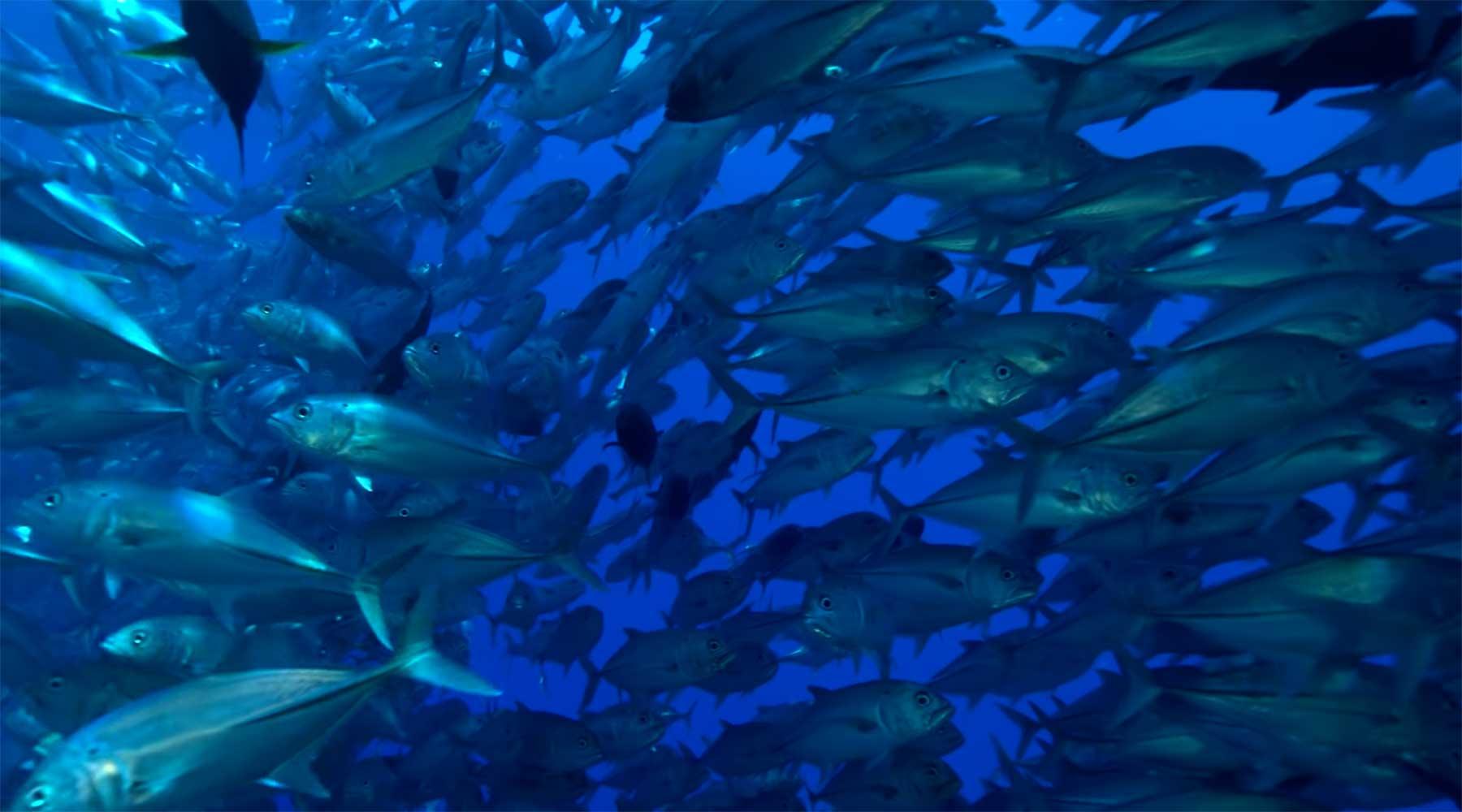 10 Stunden entspanntes Unterwasser-Leben 10-stunden-unterwasseraufnahmen