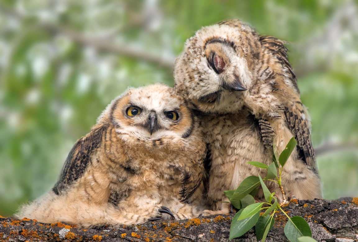 Fotografie: Tom Murphy Tom-Murphy-wildlife-fotografie_01