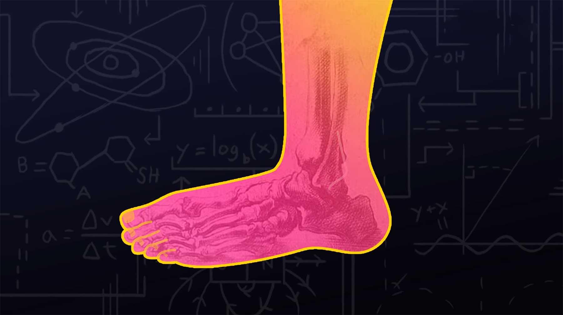 Weshalb der Fuß ein Design-Desaster ist