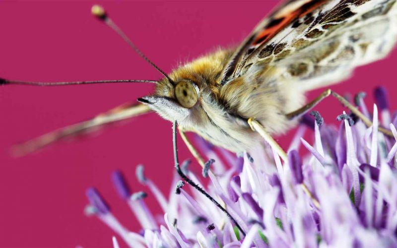 Insekten und Blüten in wunderschöner Nahaufnahme
