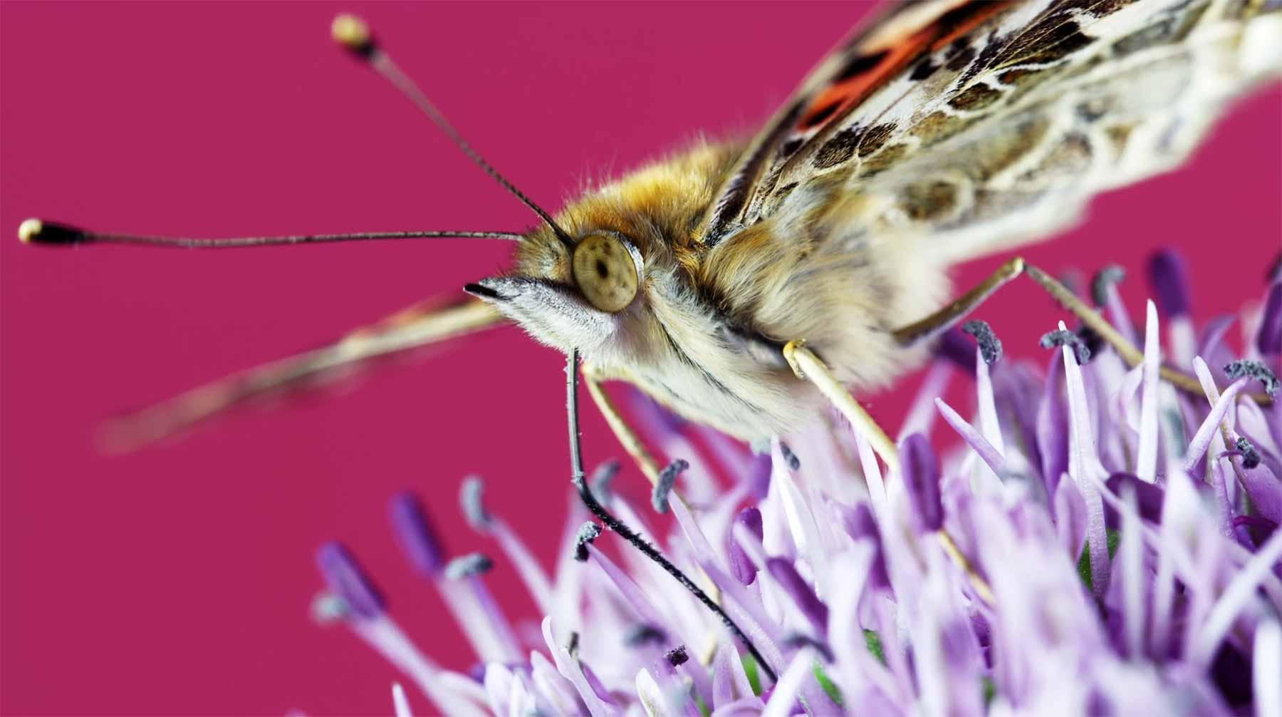 Insekten und Blüten in wunderschöner Nahaufnahme n-uprising-thomas-blanchard