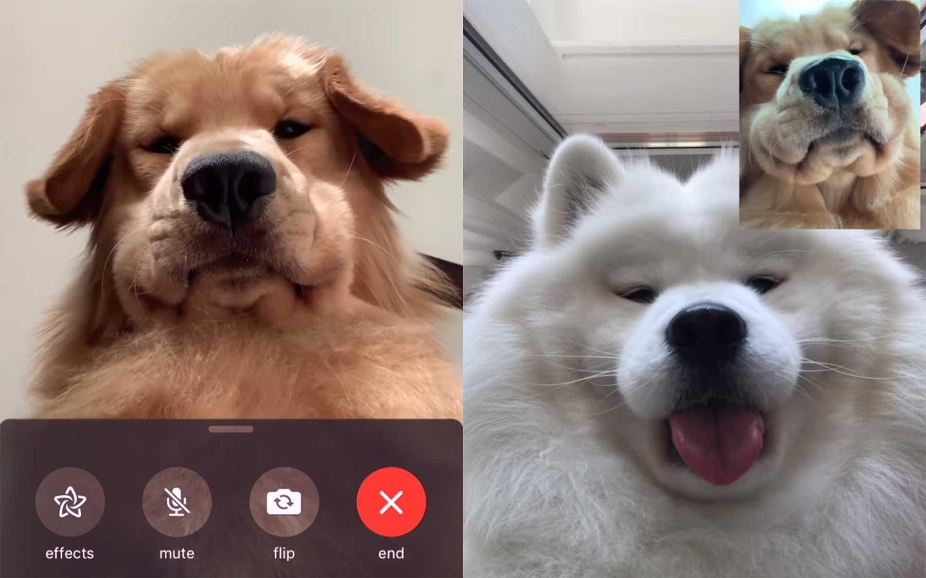 Hunde facetimen miteinander