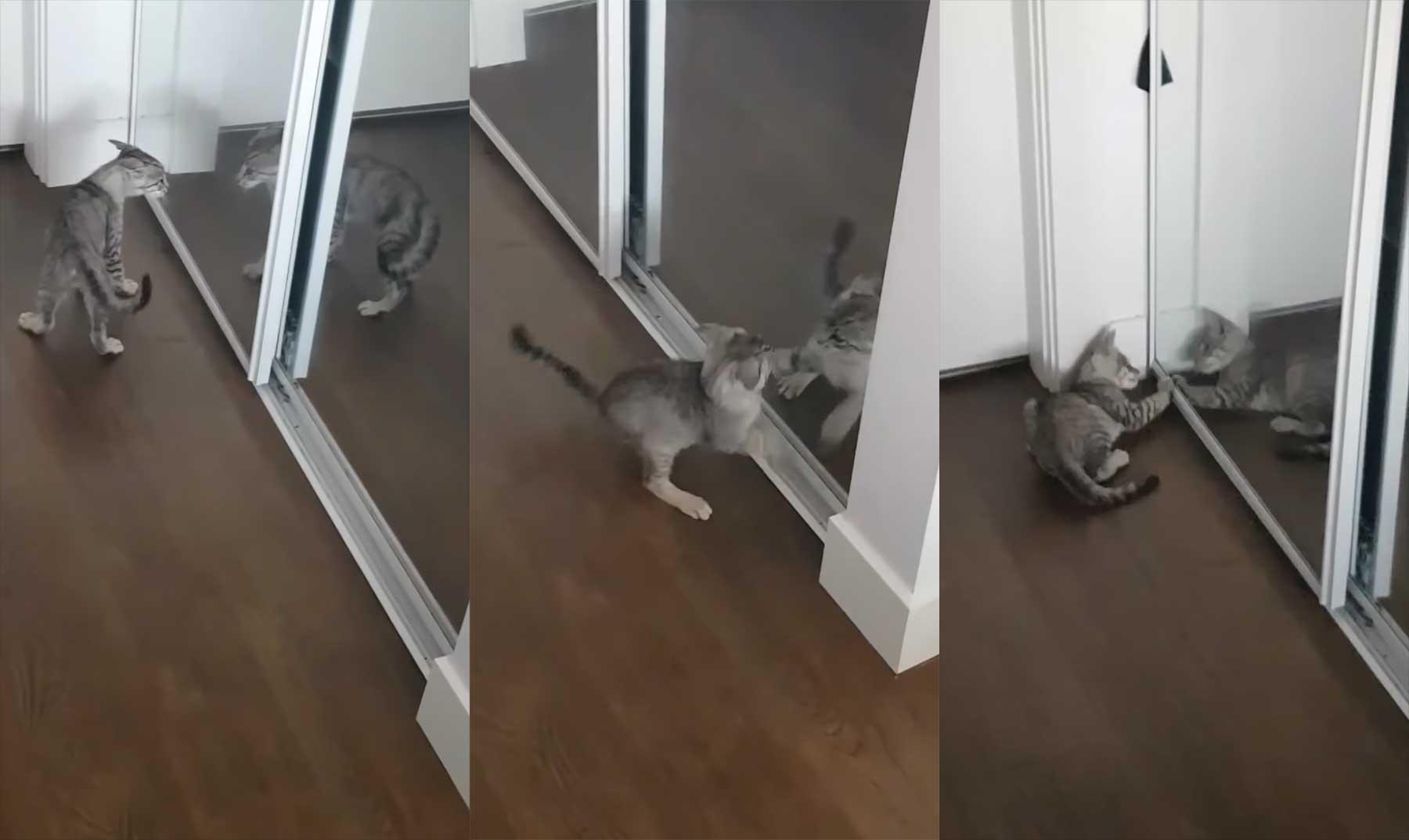 Kätzchen sieht zum ersten Mal ihr Spiegelbild
