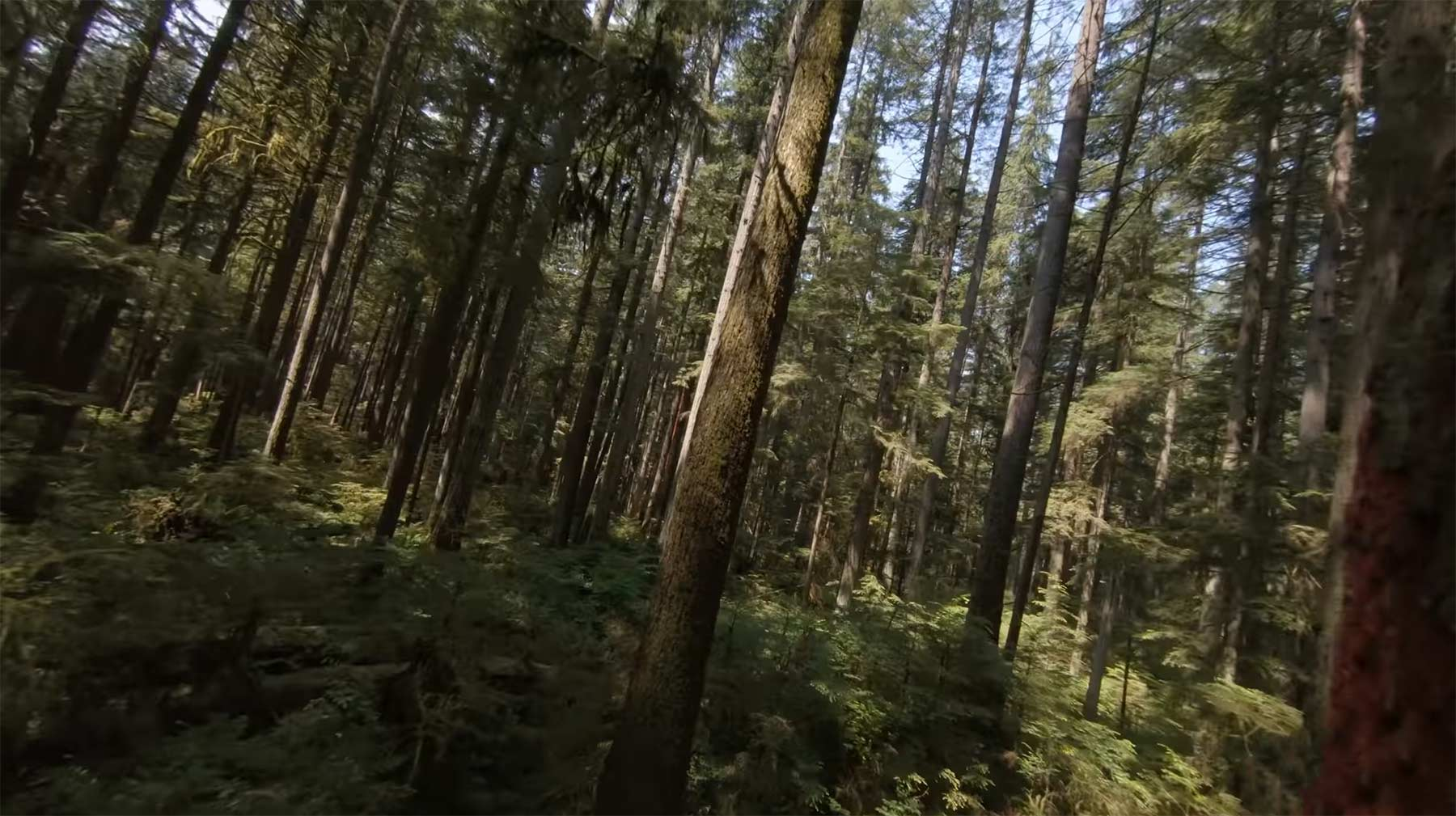 Ein entspannter Flug mit der Kameradrohne durch den Wald