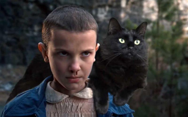 OwlKitty packt seine Katze in Serien, Filme und Musikvideos