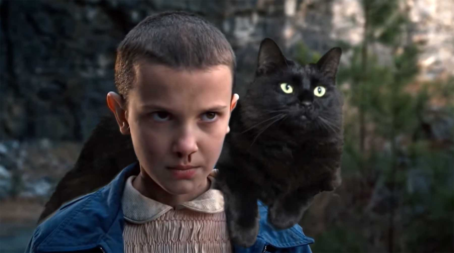 OwlKitty packt seine Katze in Serien, Filme und Musikvideos owlkitty
