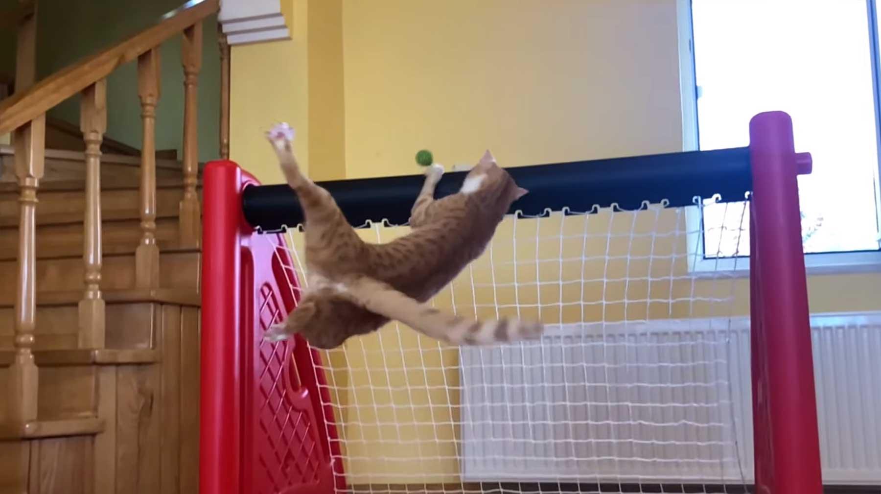 Nur eine Torhüter-Katze, die ihren Kasten sauber hält