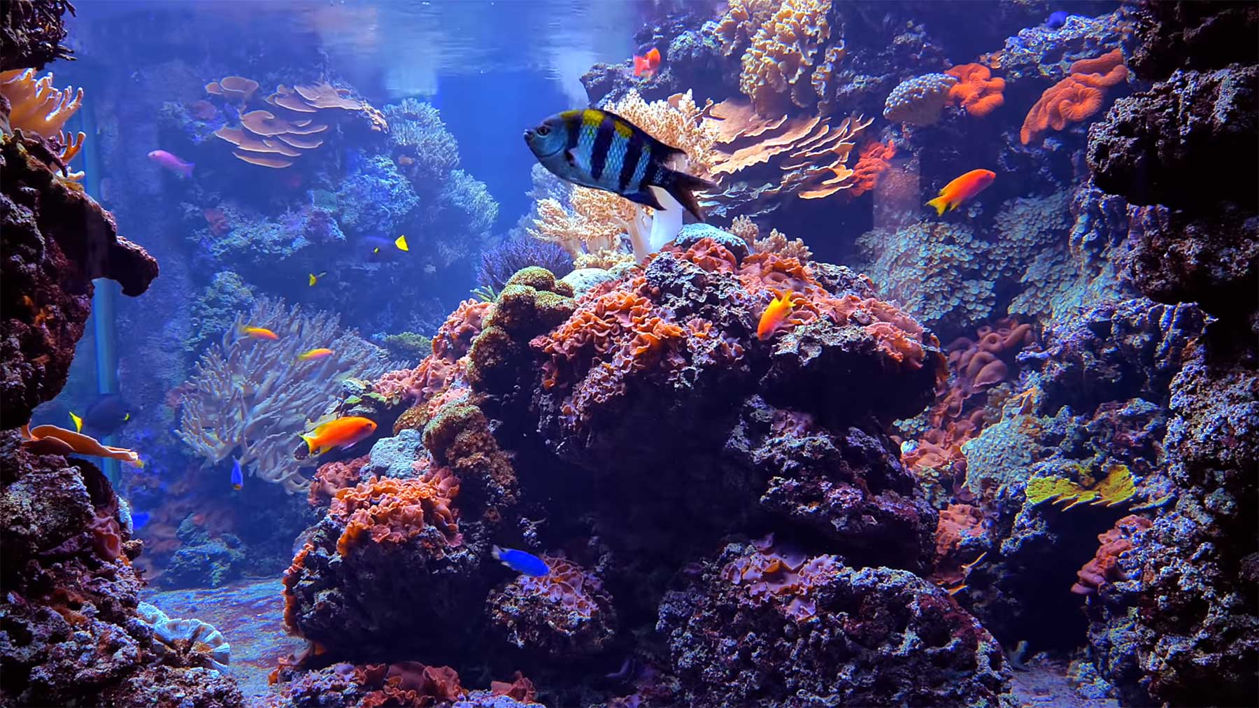 8 Stunden Korallenriff-Aquarium
