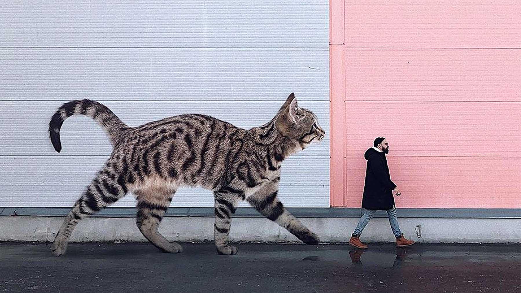 Wenn Katzen riesig wären