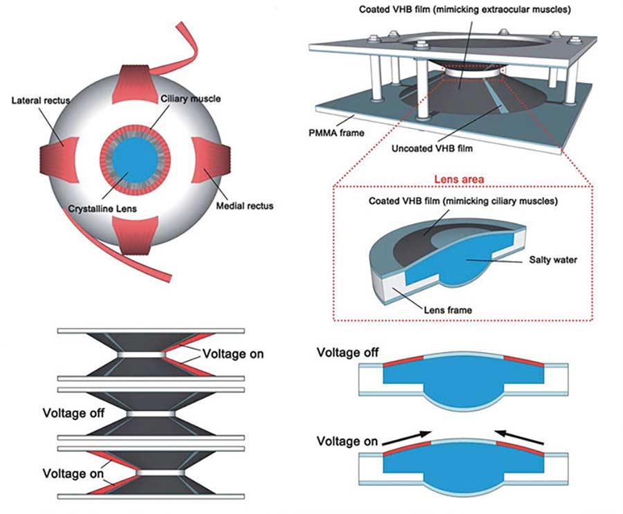 Mit diesen Kontaktlinsen soll man mittels Blinzeln zoomen können kontaktlinse-zoomen_02