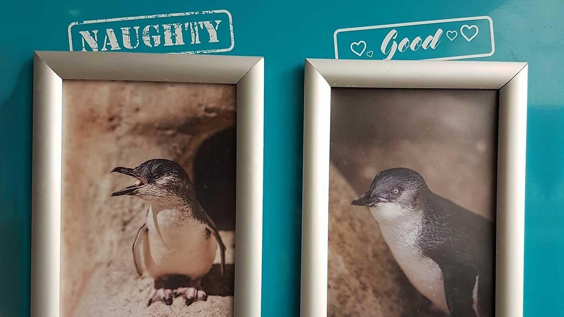 """Aquarium in Neuseeland kürt """"Pinguine des Monats"""""""