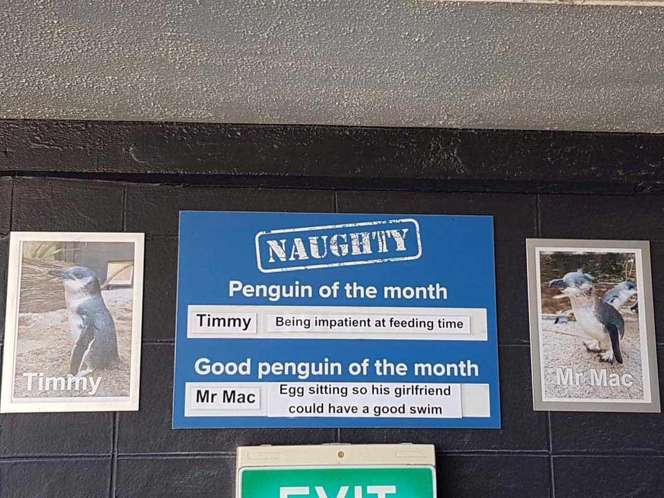 """Aquarium in Neuseeland kürt """"Pinguine des Monats"""" pinguine-des-monats-aquarium-neuseeland_09"""