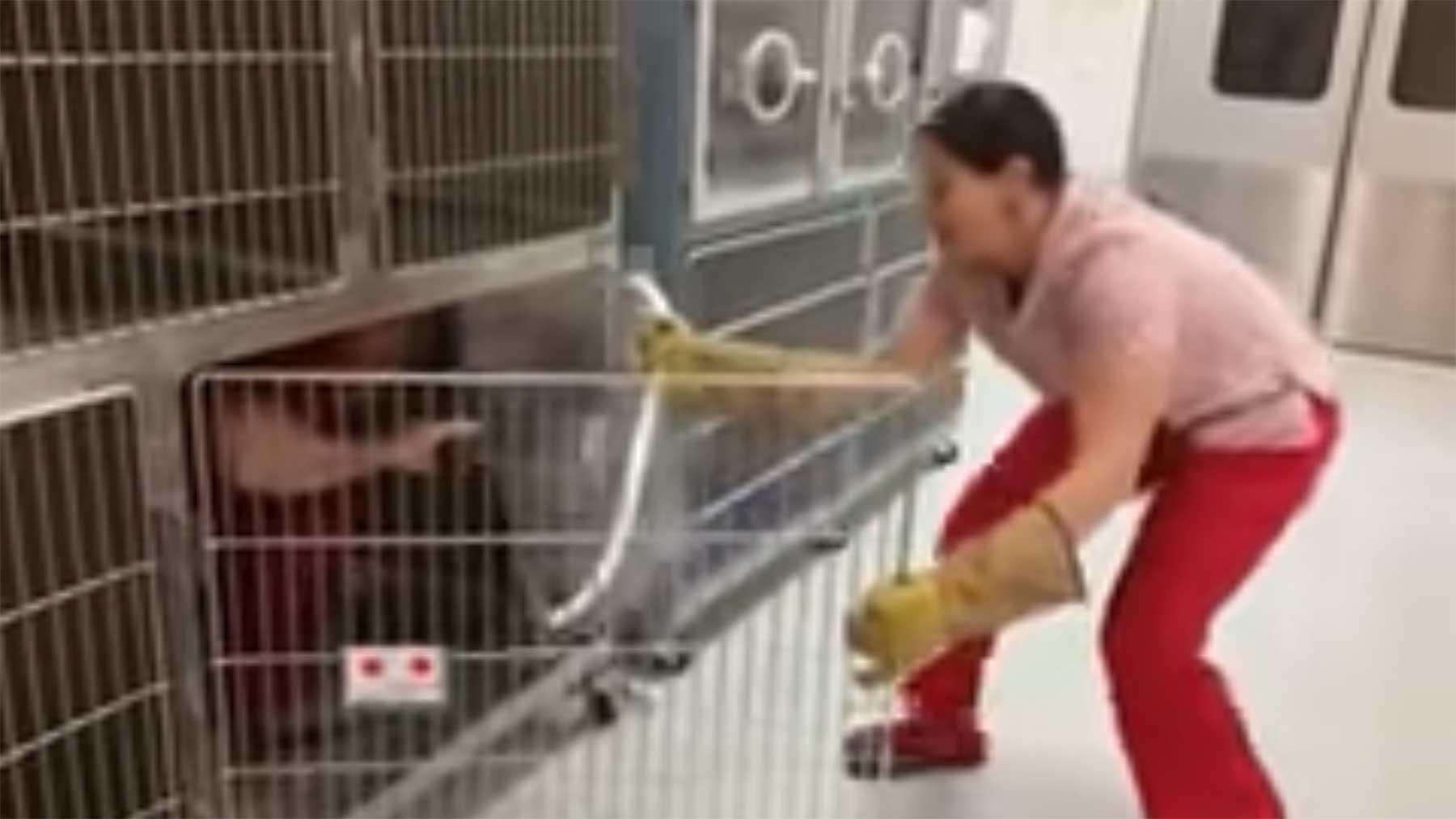 Mann spielt Aggro-Katze in Lehrvideo mann-spielt-aggressive-katze-in-trainingsvideo
