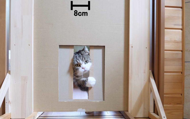 Durch wie schmale Spalten kann eine Katze sich noch zwängen?