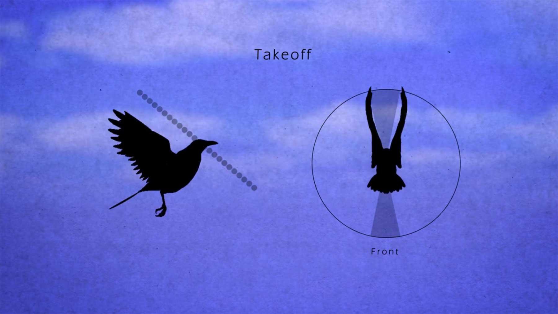 Bewegungsmuster von Vögeln