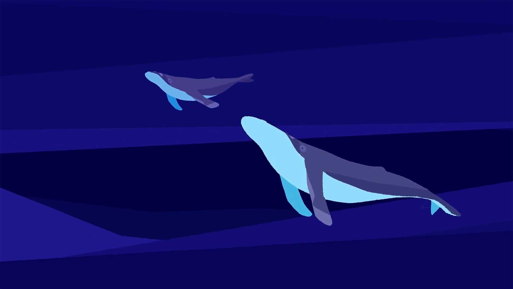 Wie Walgesang eine Tierart vor dem Aussterben gerettet hat