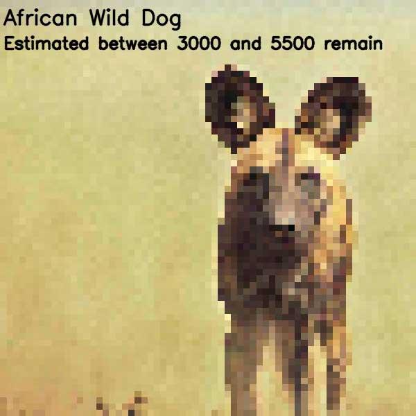 Tierbilder aus so vielen Pixeln, wie es noch Exemplare der Art auf der Welt gibt bedrohte-tierarten-aus-pixeln_02