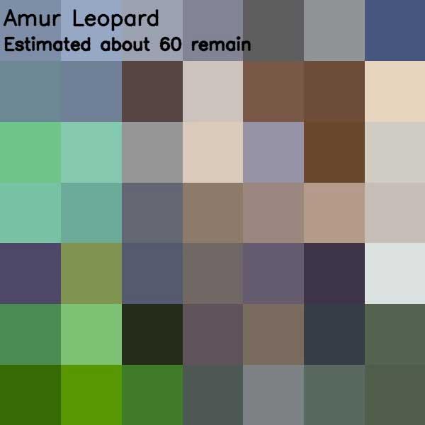 Tierbilder aus so vielen Pixeln, wie es noch Exemplare der Art auf der Welt gibt bedrohte-tierarten-aus-pixeln_03