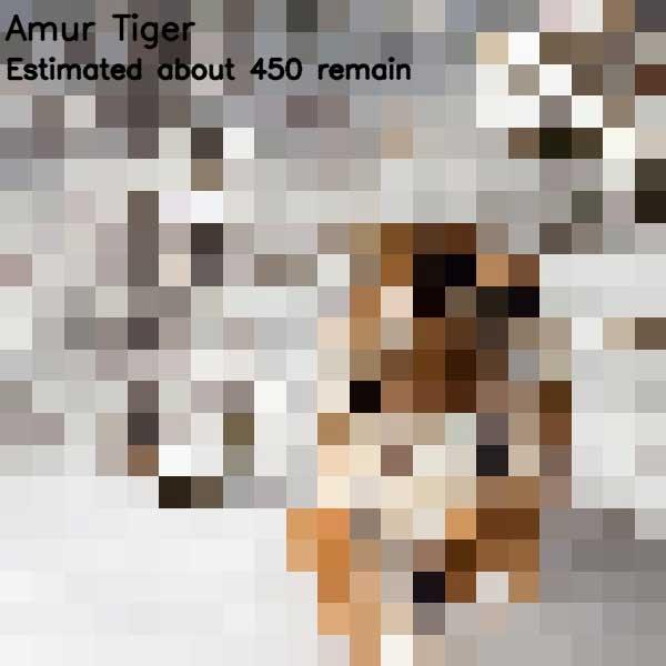 Tierbilder aus so vielen Pixeln, wie es noch Exemplare der Art auf der Welt gibt bedrohte-tierarten-aus-pixeln_04