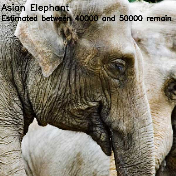 Tierbilder aus so vielen Pixeln, wie es noch Exemplare der Art auf der Welt gibt bedrohte-tierarten-aus-pixeln_05