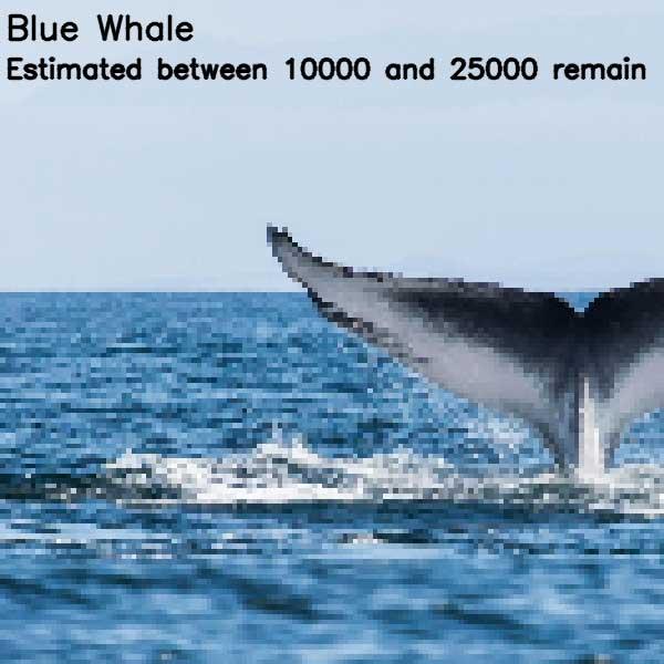 Tierbilder aus so vielen Pixeln, wie es noch Exemplare der Art auf der Welt gibt bedrohte-tierarten-aus-pixeln_08