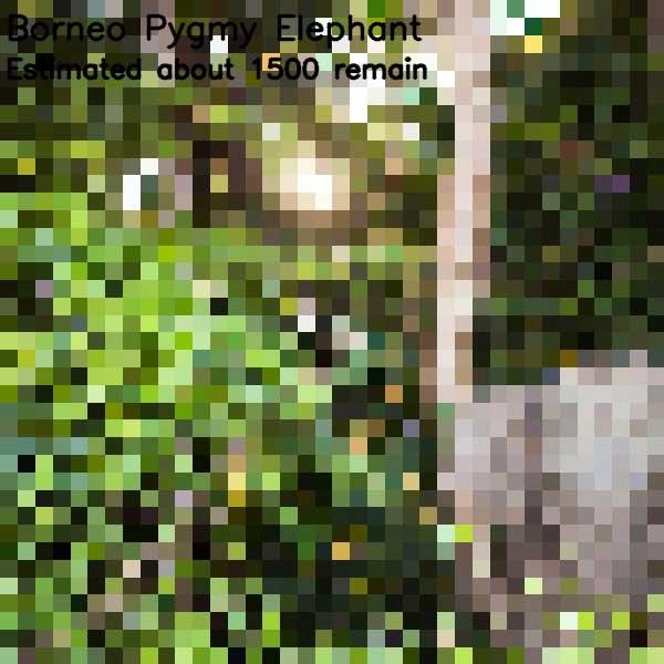 Tierbilder aus so vielen Pixeln, wie es noch Exemplare der Art auf der Welt gibt bedrohte-tierarten-aus-pixeln_09