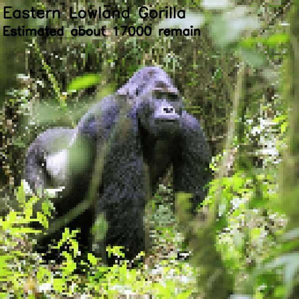 Tierbilder aus so vielen Pixeln, wie es noch Exemplare der Art auf der Welt gibt bedrohte-tierarten-aus-pixeln_10