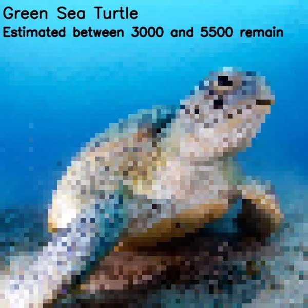 Tierbilder aus so vielen Pixeln, wie es noch Exemplare der Art auf der Welt gibt bedrohte-tierarten-aus-pixeln_13