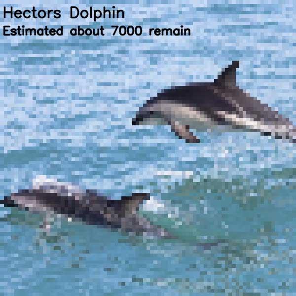 Tierbilder aus so vielen Pixeln, wie es noch Exemplare der Art auf der Welt gibt bedrohte-tierarten-aus-pixeln_14