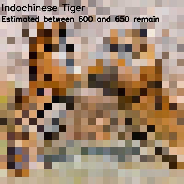 Tierbilder aus so vielen Pixeln, wie es noch Exemplare der Art auf der Welt gibt bedrohte-tierarten-aus-pixeln_15