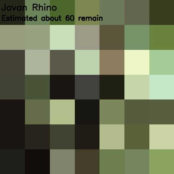 Tierbilder aus so vielen Pixeln, wie es noch Exemplare der Art auf der Welt gibt bedrohte-tierarten-aus-pixeln_16