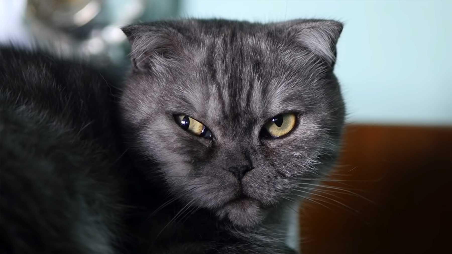 Wenn Katzen zum Psychologen gehen würden