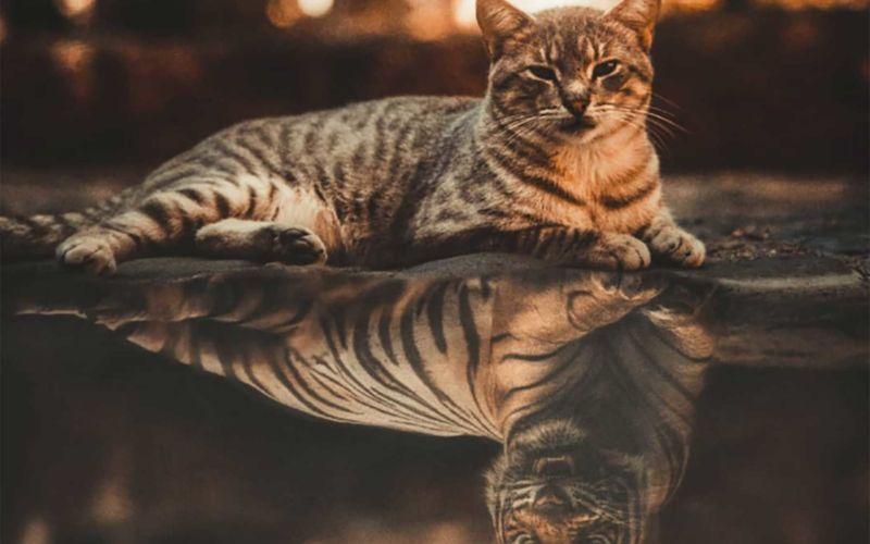Fantasievolle Fotomanipulationen von Egzon Muliqi