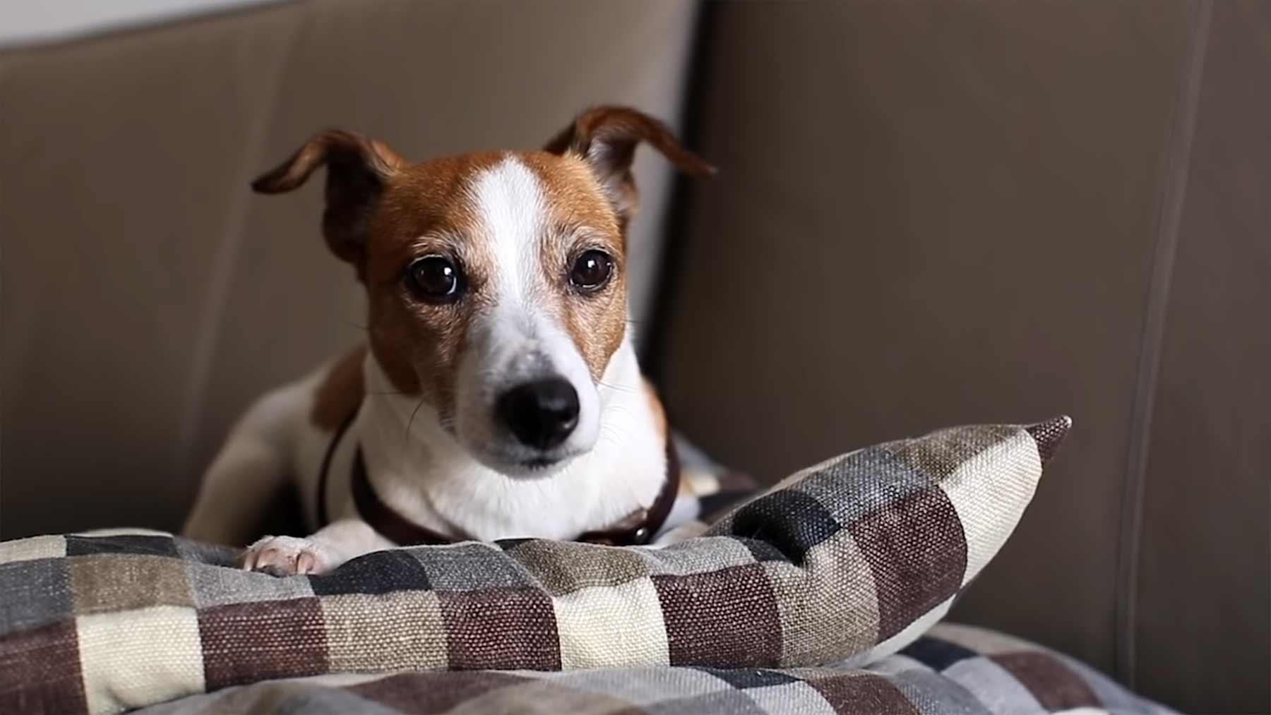 Wenn Hunde zum Psychologen gehen würden