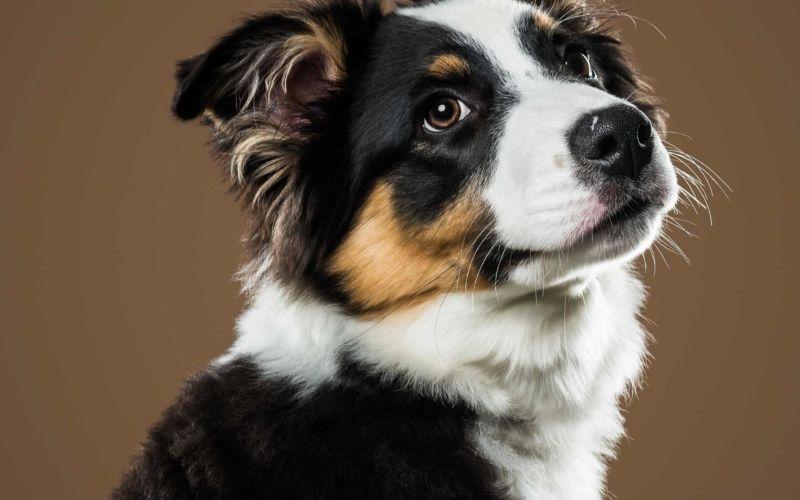 Hunde-Fotografien von Jany Tremblay