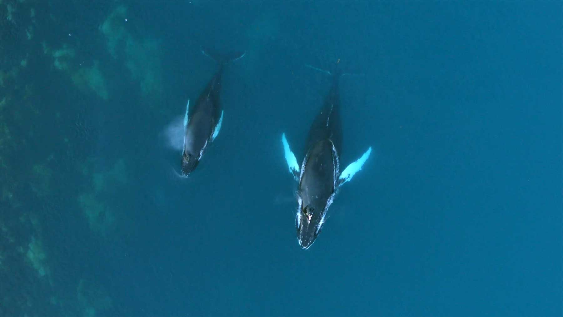 "Grönland im Sommer: ""Kalaallit Nunaat"""