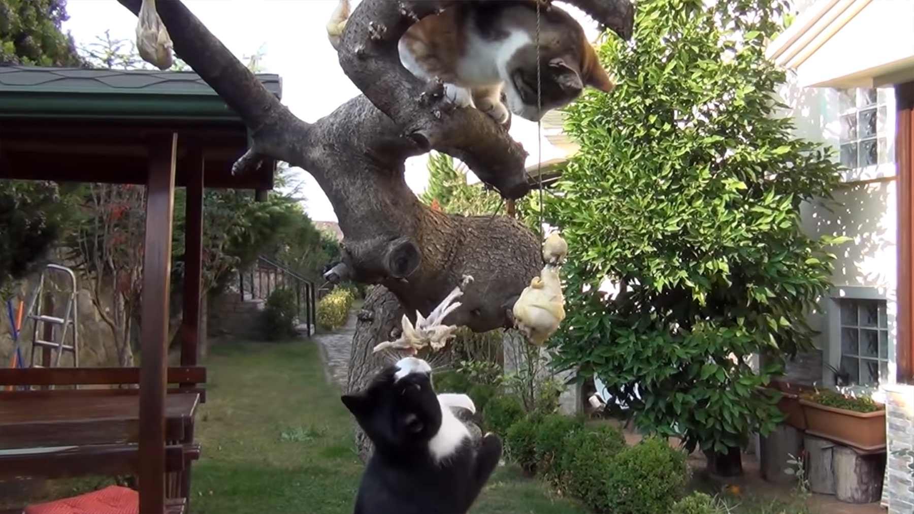 Nur ein paar Katzen und am Baum hängende Hähnchenkeulen katzen-und-haehnchenkeulen-am-baum
