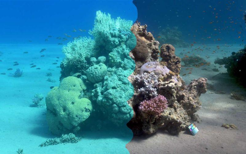 Video-Algorithmus entfernt Wasser aus Unterwasser-Aufnahmen