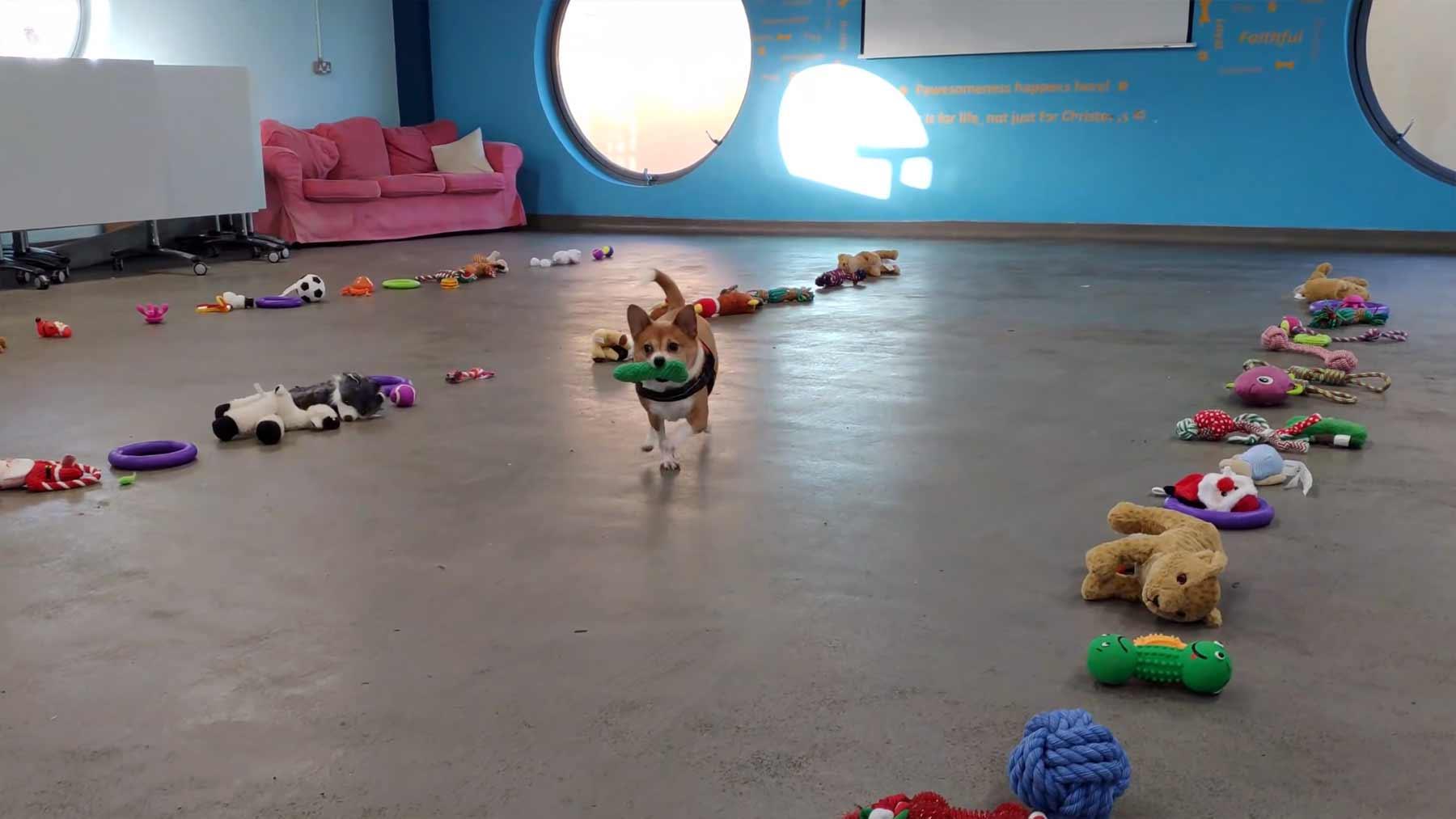 35 Tierheim-Hunde durften sich Weihnachtsgeschenke aussuchen hunde-spielzeug-aussuchen