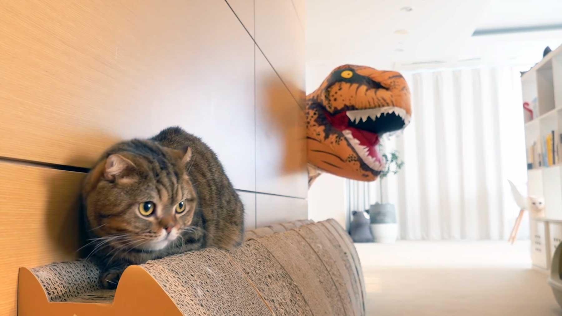 Katzen vs. Dinosaurier