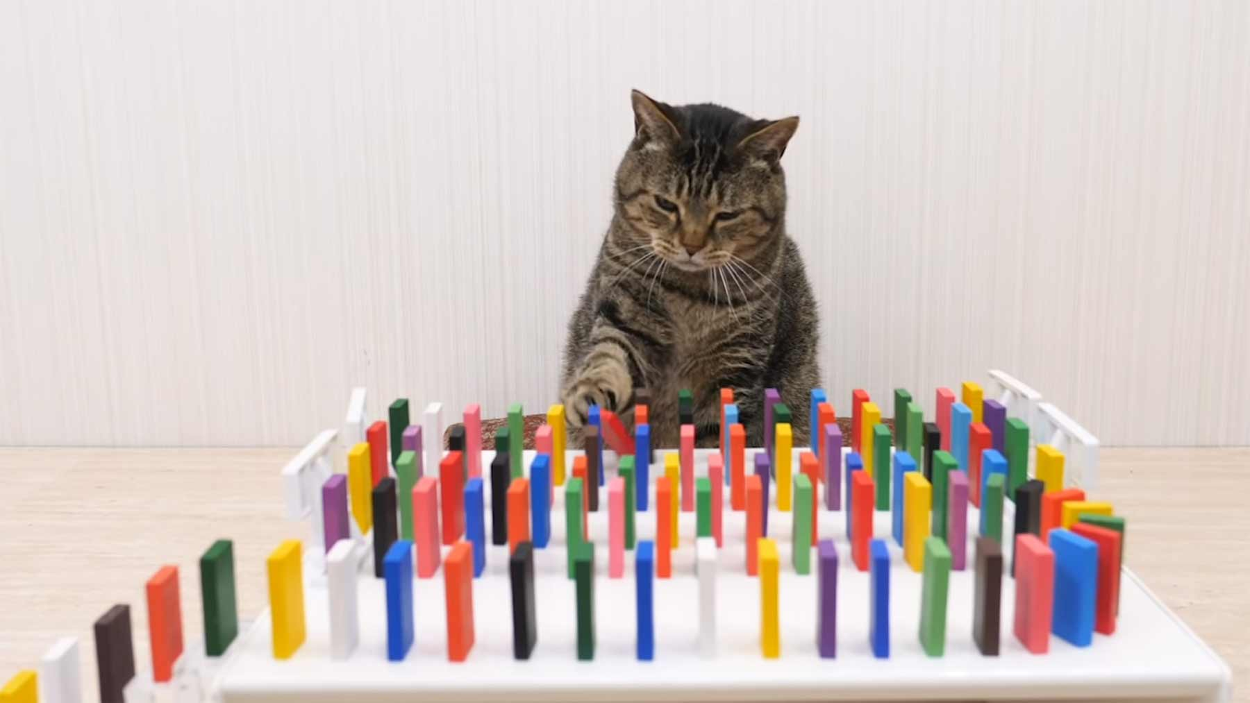 Katzen und Dominosteine cats-and-dominos