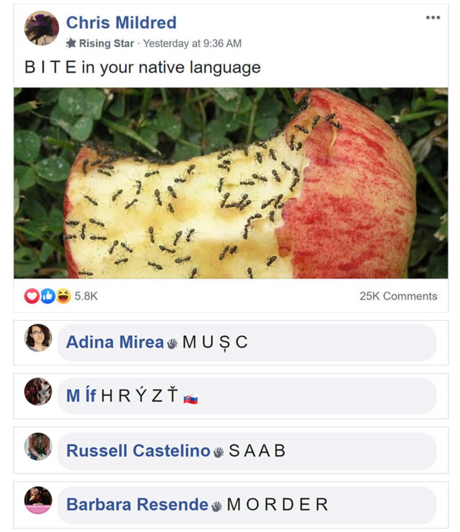 In dieser Facebook-Gruppe tun alle so, als seien sie Ameisen facebook-gruppe-wie-ameisen-tun_02