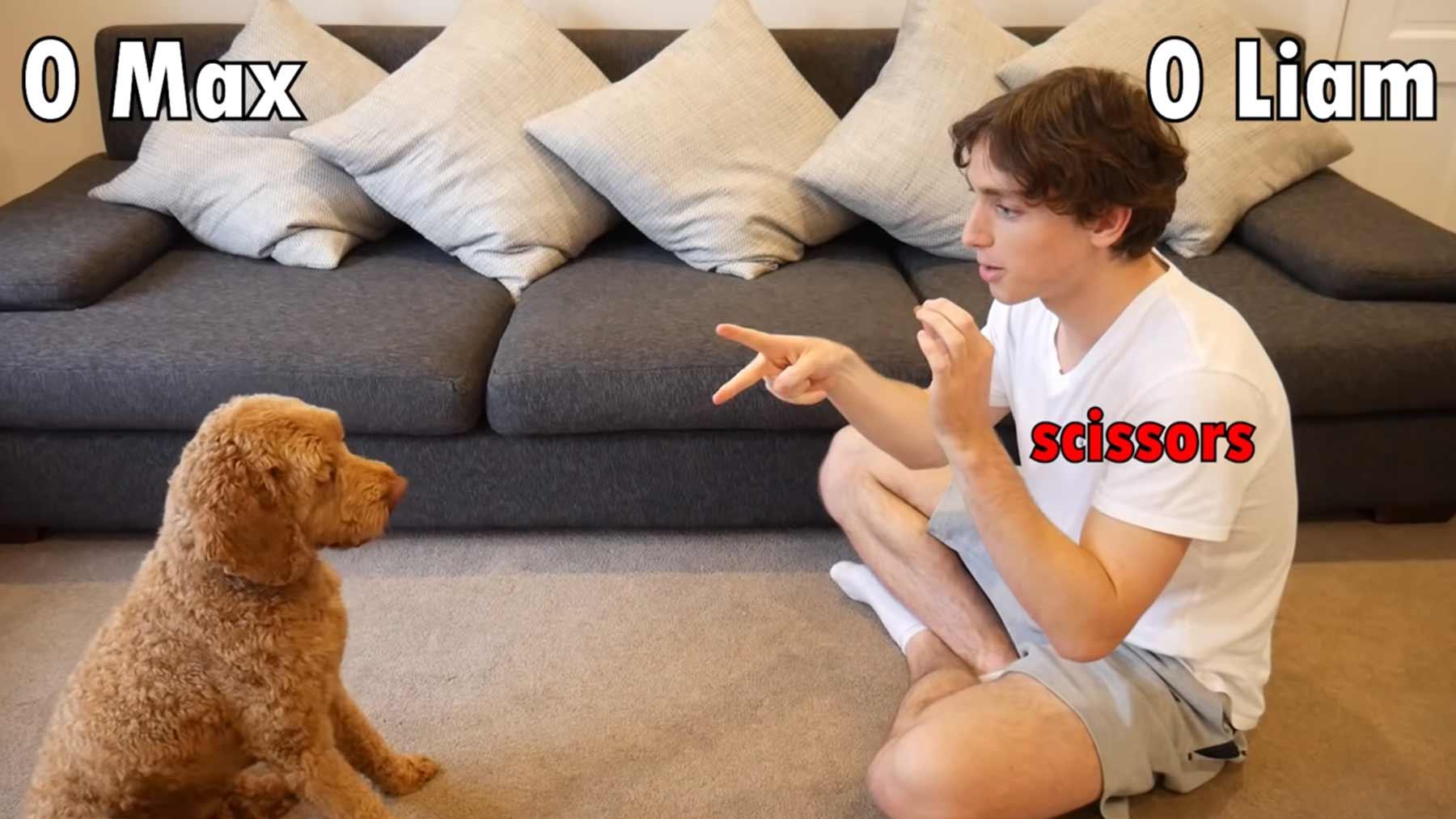 Schnick-Schnack-Schnuck mit einem Hund gespielt