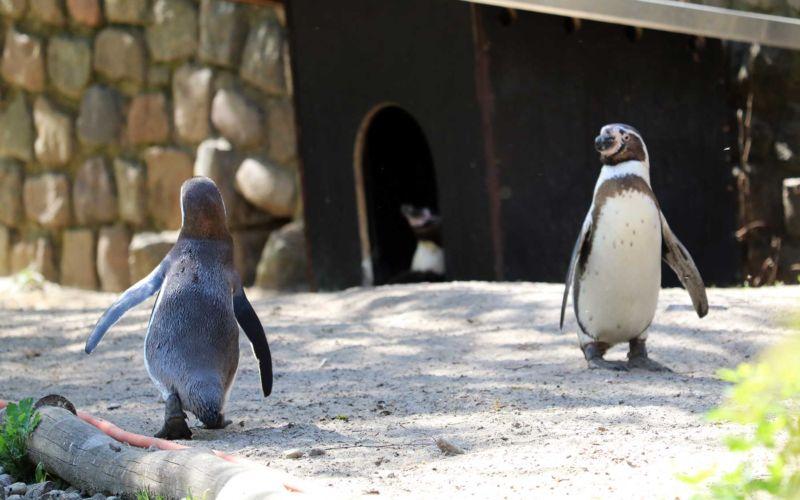 Bilder vom Besuch im Zoologischen Garten Eberswalde