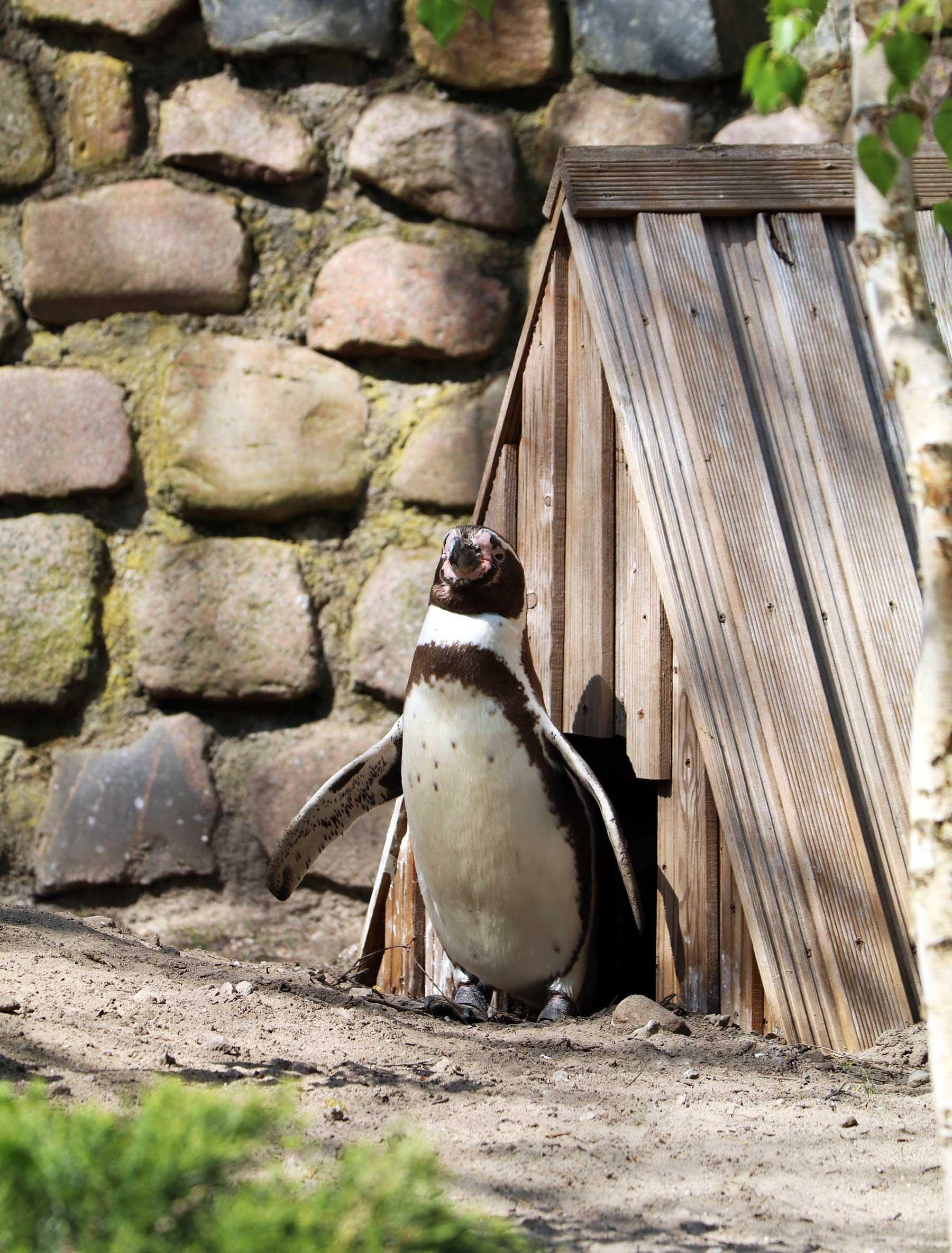 Bilder vom Besuch im Zoologischen Garten Eberswalde Zoologischer-garten-eberswalde-Besuch_06
