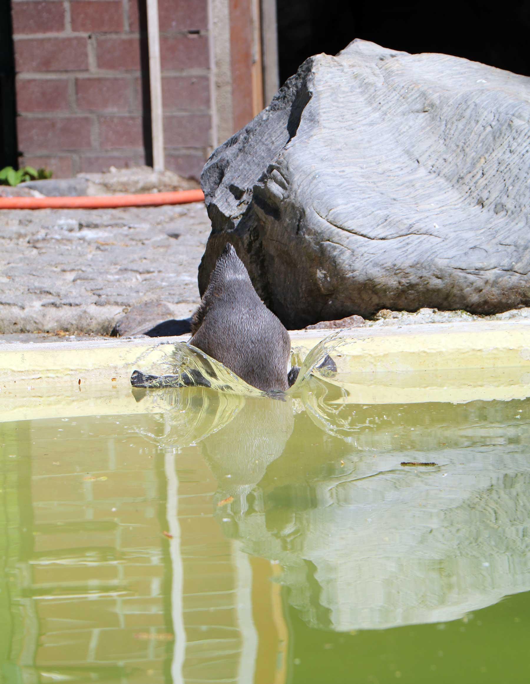 Bilder vom Besuch im Zoologischen Garten Eberswalde Zoologischer-garten-eberswalde-Besuch_08