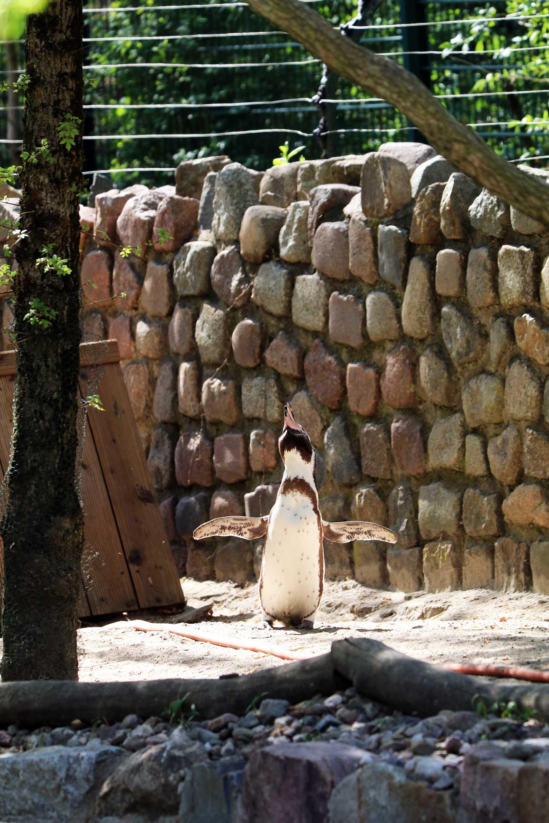 Bilder vom Besuch im Zoologischen Garten Eberswalde Zoologischer-garten-eberswalde-Besuch_11
